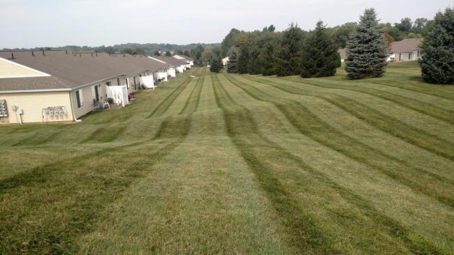 Gallery 5 Star Lawn Care